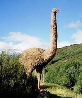 Moa New-Zealand